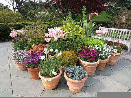 Flowers, Plants, Pots, Potted Plants, Potted Flowers