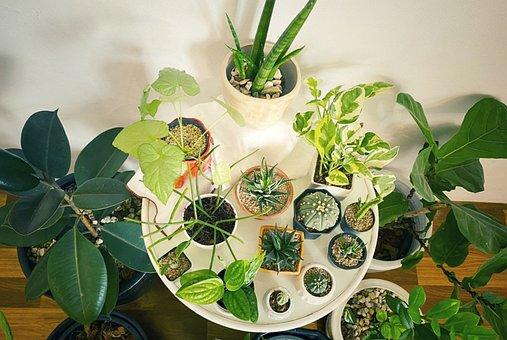 Table, Plants, Pots, Potted Plants, Indoor Plants