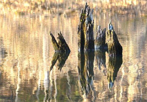 Water Reflection, Dead Wood, Log, Waters, Wood