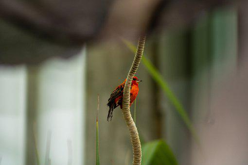 Bird, Branch, Perched, Animal, Nature, Wildlife, Orange