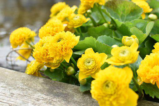 Yellow, Green, Nature, Leaf, Color, Flowers, Plant