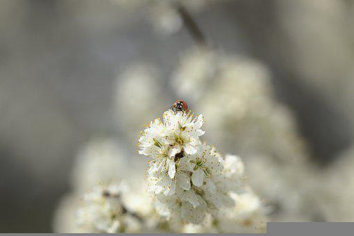 Flowers, Petals, Lady Bug, Blooming, Plant, Nature
