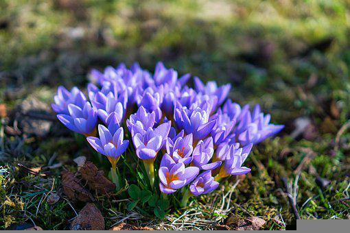 Flowers, Plant, Blossom, Bloom, Flora