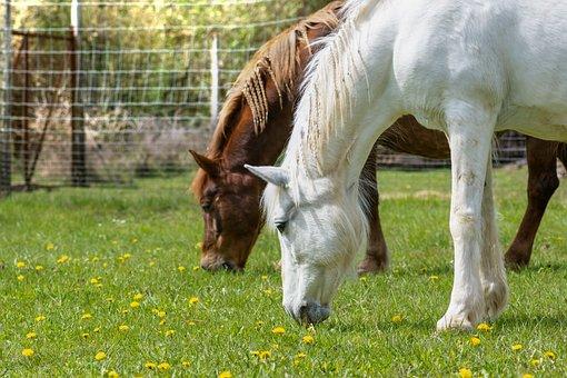 Horses, Graze, Horse Head, Farm, Mane, Ride, Rural