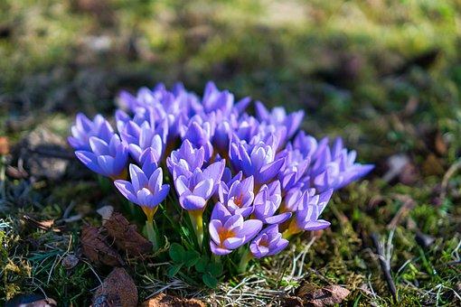 Flowers, Plant, Blossom, Bloom, Flora, Spring Flowers