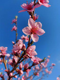 Color, Peach, Spring