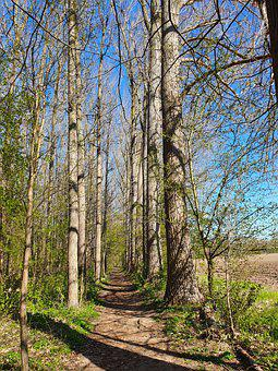 Away, Trees, Trail, Path, Landscape, Nature, Woods