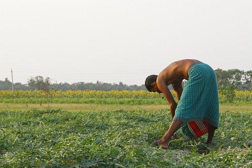 Watermelon, Agriculture, Bangladesh