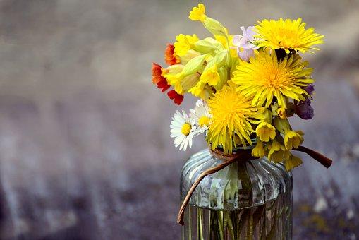Flowers, Plants, Vase, Glass Vase, Cowslip, Daisy