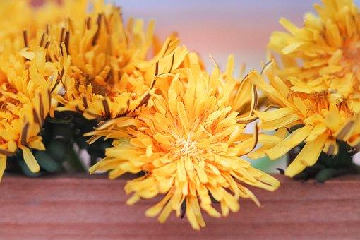 Dandelion, Flowers, Yellow, Spring, Nature, Plants