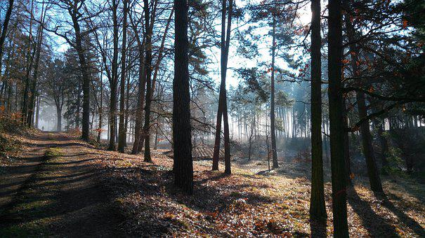Forest, Away, Fog, Hiking, Trail, Path, Trees, Woods