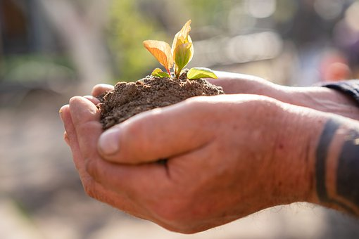 Seedling, Soil, Hands, Sprout, Leaf, Plant, Growth