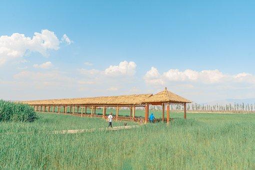 Field, Farm, Countryside, Meadow, Grass, Gazebo, Path