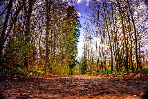 Trees, Path, Forest, Woods, Woodlands, Branches
