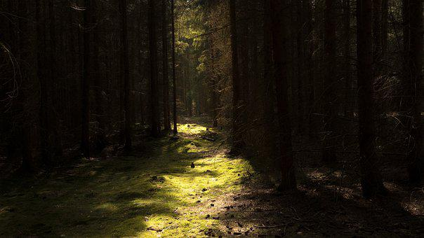 Sunlight, Path, Forest, Trees, Woods, Woodlands, Trail
