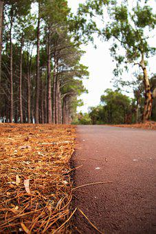 Road, Pavement, Trees, Forest, Asphalt, Ground, Nature