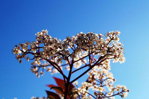 Flowers, Branch, Sky, Tree, White Flowers, Bloom, Plant