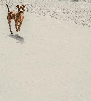 Dog, Pet, Canine, Animal, Street, Portrait, Outdoors