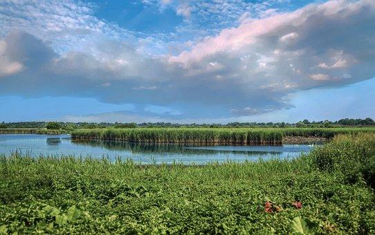 Meadow, Marsh, Reed, Grass, Wetlands, Water, Field