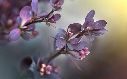 Plant, Twigs, Sprig, The Buds, Foliage, Nature, Bush