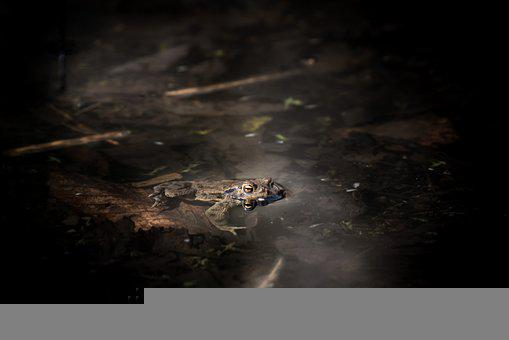 Nature, Water, Landscape, Toad, Live, Amphibians