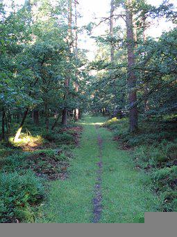 Forest, Trail, Grass, Trees, Woods, Woodlands, Glade