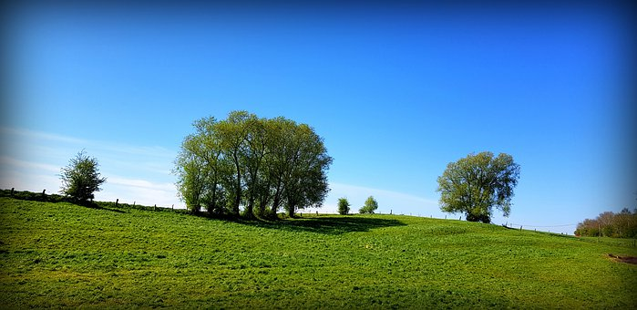 Trees, Fields, Meadows, Hills, Grasslands, Grassy, Lush
