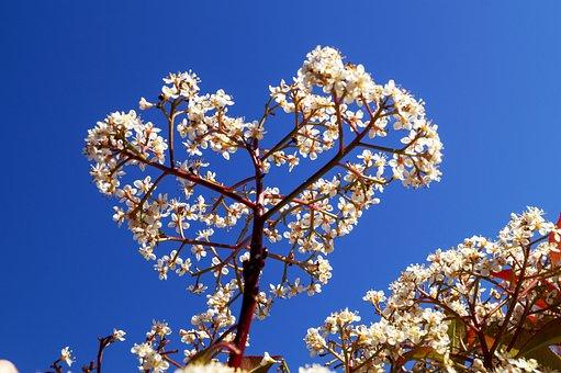 Flowers, Branch, Tree, Sky, White Flowers, Bloom, Plant