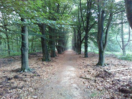 Forest, Trail, Trees, Woods, Woodlands, Path