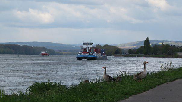 River, Geese, Cargo Ship, Rhine