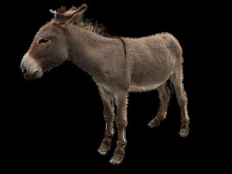 Donkey, Farm, Animal, Mule, Domestic, Farm Animal