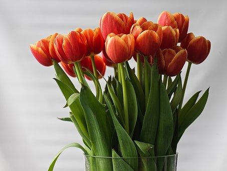 Tulips, Flowers, Vase, Petals, Bloom, Spring Flowers
