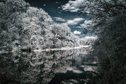 Trees, Forest, Swamp, Infrared, Nature, Water