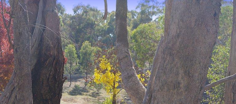 Autumn, Trees, Leaves, Foliage, Autumn Leaves