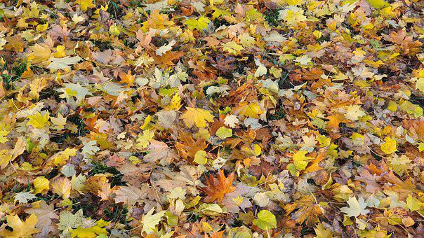 Autumn, Leaves, Foliage, Fallen Leaves, Dried Leaves