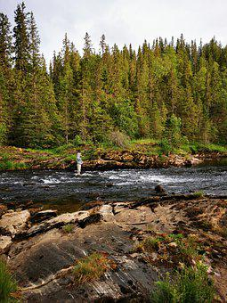 River, Fishing, Forest, Bank, Man, Fly Fishing, Leisure