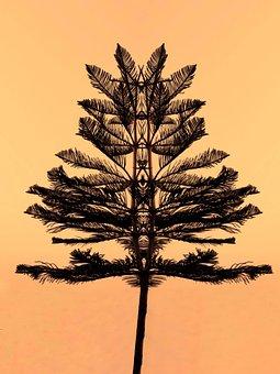 Pine, Tree, Sunset, Sunrise, Silhouette, Leaves