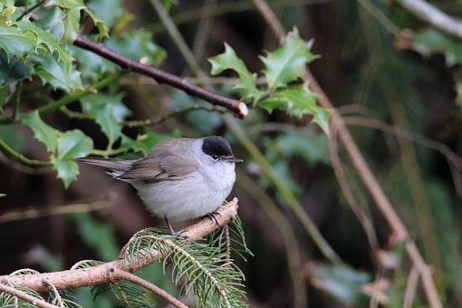 Marsh Tit, Bird, Branch, Perched, Tit, Animal, Wildlife