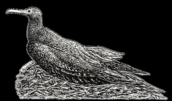 Cormorant, Nest, Bird, Aquatic, Sea, Shore