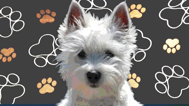 Westie, Dog, Puppy, Terrier