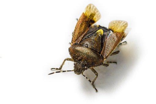 Insect, Bug, Entomology, Creature, Fauna, Wildlife