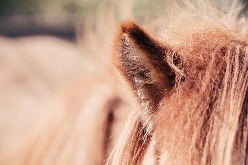 Pony, Horse, Ear, Detail, Close Up, Listen, Fur, Hair