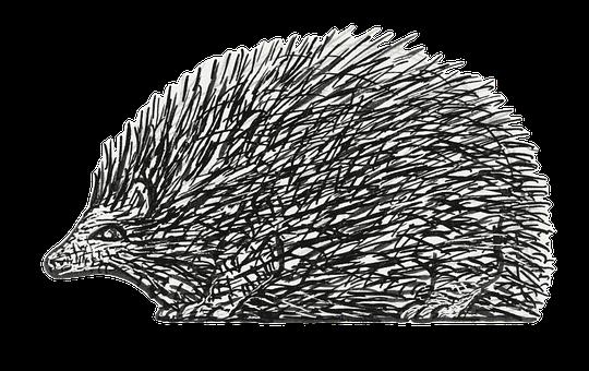 Hedgehog, Animal, Mammal, Nocturnal, Prickly