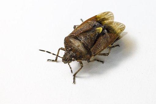 Insect, Bug, Entomology, Creature, Fauna, Parasite