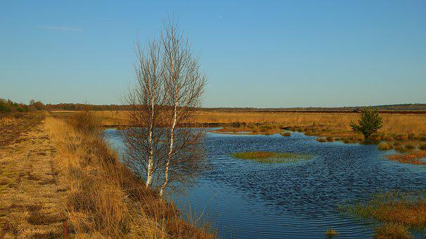 Moor, Trees, Grass, Water, Landscape, Nature, Swamp