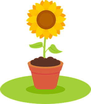 Sunflower, Yellow, Pot, Flower, Bloom, Blossom, Plant
