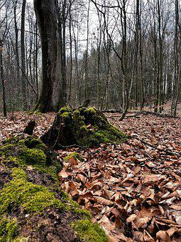 Forest, Leaves, Moss, Woods, Tree Stump, Trees