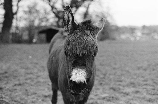 Donkey, Animal, Head, Mammal, Farm, Nature, Rural