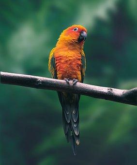 Parrot, Bird, Branch, Perched, Animal, Wildlife