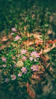 Plants, Flowers, Wildflowers, Pink Flowers, Bloom